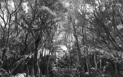 Kaimōhū